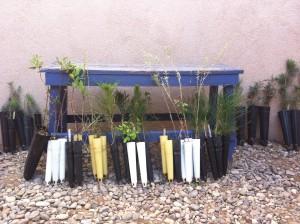 Native plants, courtesy of NM Dept of Wildlife